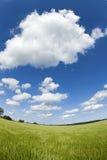 błękit pola zieleni nieba lato Zdjęcie Stock