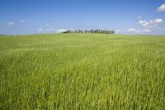 błękit pola zieleni nieba lato Zdjęcia Stock