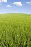 błękit pola zieleni niebo Obrazy Royalty Free