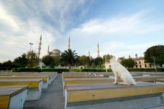 błękit psa przodu Istanbul meczetowy indyczy dowcip Obraz Royalty Free