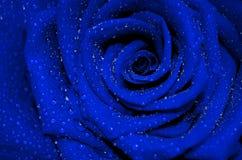 Błękit róża z kropelkami Zdjęcie Stock