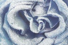 Błękit róża zakrywająca z śniegiem z bliska zdjęcia stock