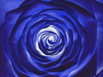 Błękit róży kwiat, zamyka up Obrazy Royalty Free