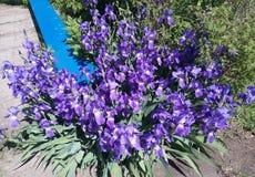 Błękit, roślina, kwiat, światło, słońce, flowerbed, liść, ampuła unikalna, piękny, ławka, park, odpoczynek obrazy stock