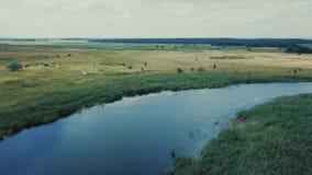 Błękit spokojna rzeka odbija białej chmury zieleni zwartych lasy na horyzontu widoku z lotu ptaka zdjęcie wideo