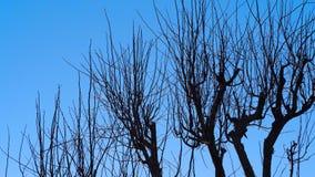 błękit suchy nieba drzewo Fotografia Royalty Free