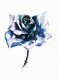 błękit wzrastał Obrazy Royalty Free