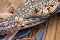 błękit zakończenia krab Zdjęcie Stock