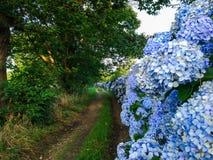 Błękita i fiołka kwiatów zbliżenie z sposobem w Zdjęcia Royalty Free