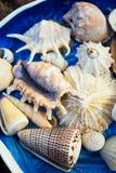 Błękita oceanu półkowe skorupy Obraz Royalty Free