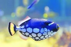 Błękita rybi akwarium Obrazy Royalty Free