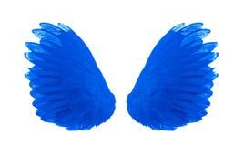 Błękita skrzydło odosobniony na białym tle fotografia royalty free