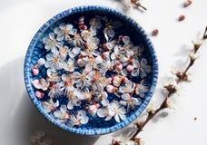 Błękita talerz z unosi się kwiatami Zdjęcia Royalty Free