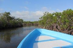 Błękitna łódź w mangrowe 2 obrazy royalty free