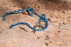 Błękitna arkana na gorącym lato pustyni plaży piasku Obraz Royalty Free