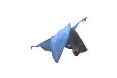 Błękitna bój ryba Zdjęcia Stock