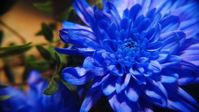 Błękitna bajka Obrazy Royalty Free
