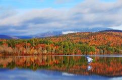 Błękitna czapla i jesień kolory Biali jeziora i góra Obraz Stock