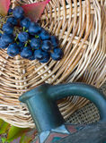 błękitna gałąź winogrono Obraz Royalty Free