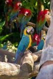 Błękitna i żółta papuga na drzewie Zdjęcie Stock