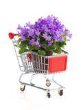 Błękitna kampanula kwitnie w wózek na zakupy Fotografia Royalty Free