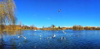 Błękitna miasta jeziora panorama Zdjęcie Royalty Free