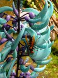Błękitna osa i kwiat Fotografia Royalty Free