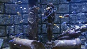 Błękitna przygoda Łowi w akwarium zbiory