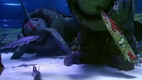 Błękitna przygoda Łowi w akwarium zdjęcie wideo