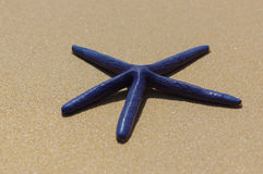 Błękitna rozgwiazda na białym piaska słonecznym dniu Zdjęcia Stock