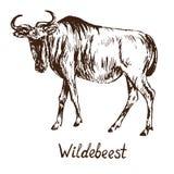 Błękitna wildebeest gnu antylopy pozycja, ręka rysujący doodle, nakreślenie ilustracja wektor
