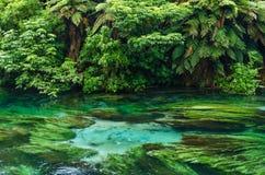 Błękitna wiosna Hamilton Nowa Zelandia która lokalizuje przy Te Waihou przejściem, obraz royalty free