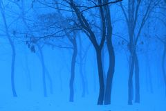 Błękitna zima Fotografia Stock