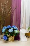 Błękitne hortensi i kici wierzby Obraz Royalty Free