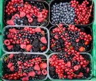 Błękitne i Czerwone czernicy, czarne jagody, malinki na tle dla sprzedaży, fotografia royalty free