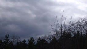 Błękitne i szare burz chmury lata nad sylwetkowymi krzakami zdjęcie wideo