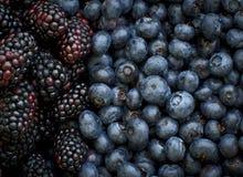 Błękitne jagody i Czarne jagody Fotografia Stock