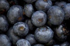 Błękitne jagody makro- Obraz Royalty Free