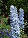 błękitne kwiaty Zdjęcie Royalty Free
