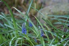 błękitne kwiaty Obrazy Royalty Free