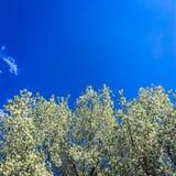 błękitne niebo Chmury niebieskie niebo białe chmury Zdjęcia Stock