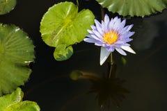 Błękitne wody leluja w słonecznym dniu Obrazy Royalty Free