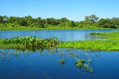 Błękitne wody rzeka w Pantanal, Brazylia Obrazy Stock