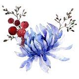 Błękitnego asteru botaniczny kwiat Odosobniony bukiet ilustracji element zielony liść tła bazy projekta ustalona akwarela royalty ilustracja