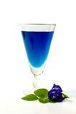 Błękitnego Herbacianego Ziołowego Wysuszonego Clitoria Ternatea Motyli groch Fotografia Royalty Free