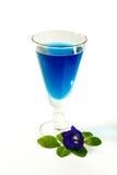 Błękitnego Herbacianego Ziołowego Wysuszonego Clitoria Ternatea Motyli groch Obraz Stock