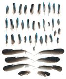 Błękitnego Jay skrzydła piórka odizolowywający na bielu Zdjęcie Stock