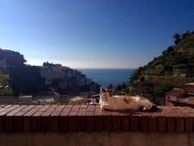 Błękitnego kota odpoczynek zdjęcie royalty free