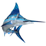 Błękitnego Marlin oceanu ryba Obrazy Royalty Free