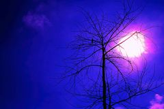 Błękitnej nocy Halloweenowy ptak na drzewnym nieboszczyku Obrazy Stock